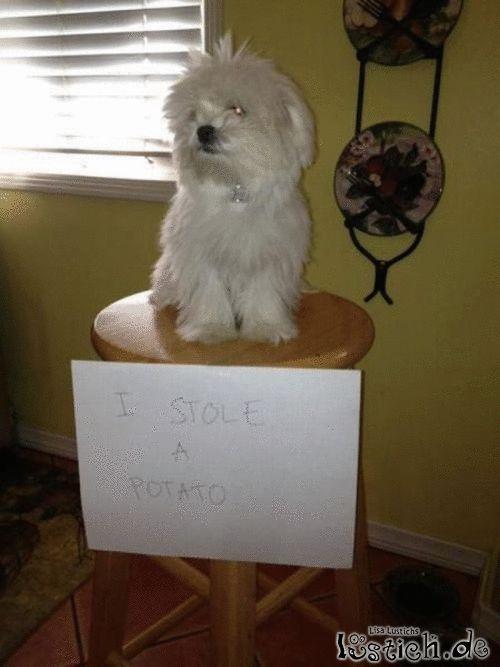 Der Stuhl der Schande