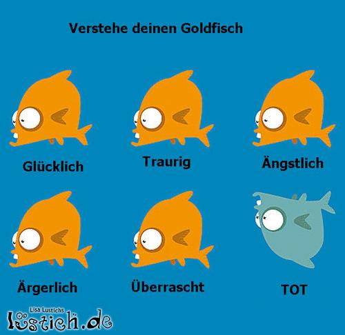 Goldfisch-verstehen