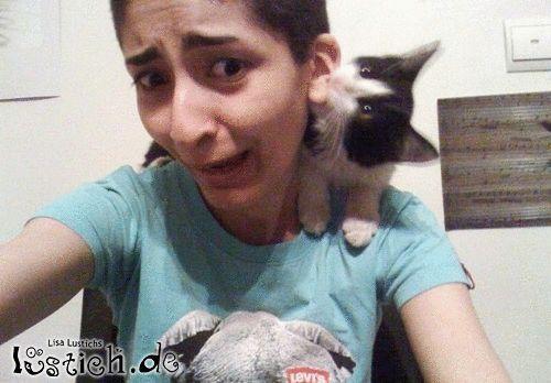 Bösartiges Kätzchen