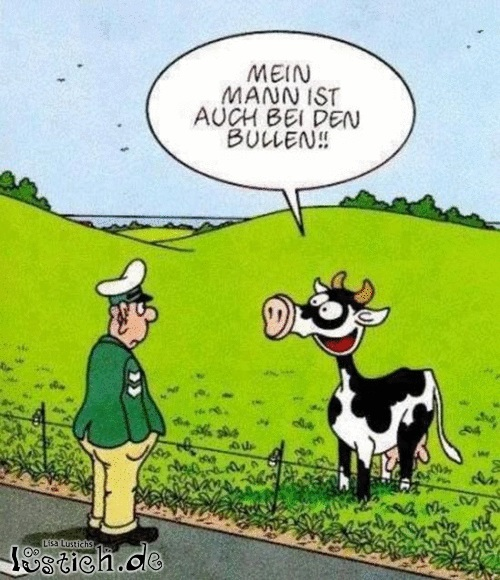Bullen Bild - lustich.de