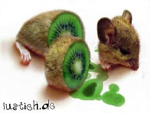 Kiwi-Maus