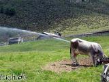 Hochdruck-Kuh