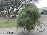 Heu-Fahrrad