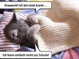 Kranke Katze