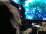 Hund liebt Computer-Spiele