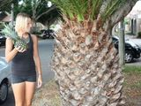 Das nenn ich mal ne Ananas