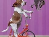 Fitnessgerät für Hunde