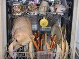 Hund im Geschirrspüler