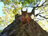 interessiertes Eichhörnchen