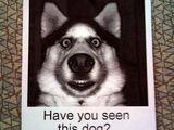 Hast du diesen Hund gesehen?