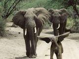 Fliegender Dumbo