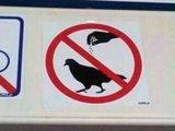 Keine Tauben würzen