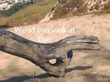 Wood you look at that?