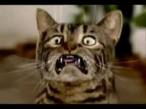Katzen Erschrecken