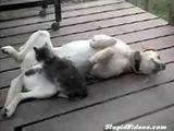 Hund lässt sich von Katze verwöhnen