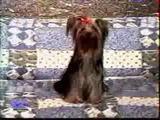 gesprengter Hund