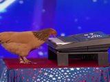 Huhn bei einer Talentshow